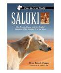 foto perro saluki en el desierto