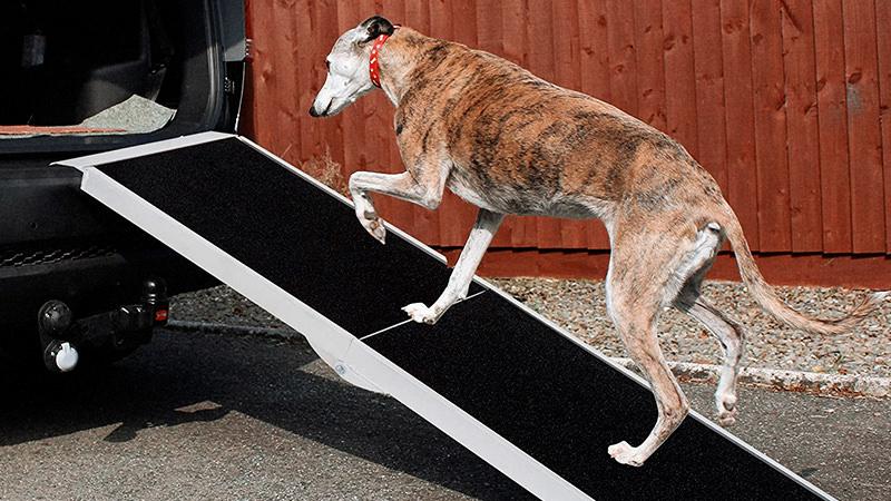 rampa de aluminio antideslizante para aaceso al maletero de perro galgo